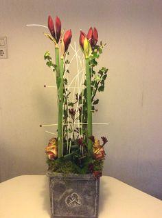 Amarillis, Garden Trees, Art Floral, Bulbs, Glass Vase, November, Winter, Plants, Christmas