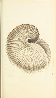 from 1789 - George Shaw and E. Nodder - The naturalists' miscellany : Coloured figures of natural objects; drawn and described immediately from nature