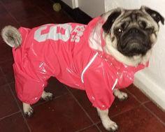 pug-dog-raincoat-jumpsuit