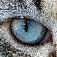 bl cat
