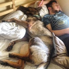 So true, my grand-dog sleeps between grandpa and I. Dog Sleeping Positions, Sleeping Dogs, Funny Dogs, Funny Animals, Cute Animals, Malinois Dog, Sleeping Alone, German Shepherd Dogs, German Shepherds