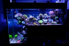Drop off reef Salt Water Fish, Salt And Water, Fresh Water, Marine Aquarium, Reef Aquarium, Aquarium Ideas, Saltwater Fish Tanks, Saltwater Aquarium, Reef Aquascaping