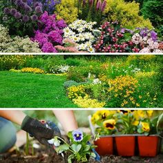 Learn how to grow perennials in your garden with this step-by-step planting guide. http://gardenseason.com/perennial-garden/