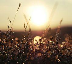 Dawn & Field