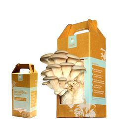 Back to the Roots Grow-Your-Own Mushroom Garden