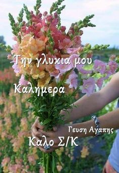 Beautiful Pink Roses, Anastasia, Good Morning, Plants, Buen Dia, Bonjour, Plant, Good Morning Wishes, Planets