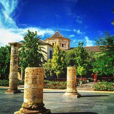 El jardín del Hospital o del MuVIM ha sido galardonado como el mejor jardín en su categoría: Espacio público.