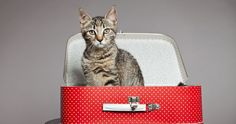 Your itinerary is set and you're all packed - but what about your pet? - http://www.entirelypets.com/what-to-do-with-your-pet-when-you-travel.html?utm_source=twitter&utm_medium=web&utm_campaign=eptwpostarticle