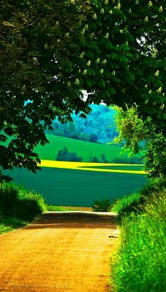The golden road leads to yellow and green fields in France.