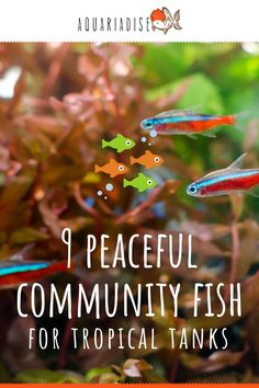 When setting up a tropical aquarium you'll need to start with a combination of the most peaceful species. Check out our list of the nine most calm fish to pair together in a tank.