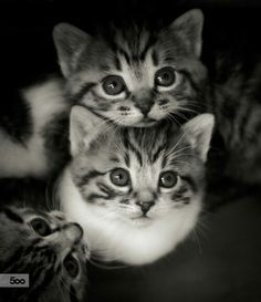 Aw, wittle nuggets! // cute baby kittens