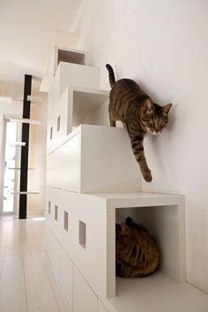 ペットが家族の一員になっている、という家も多いのでは… Y a-t-il beaucoup de foyers où les animaux domestiques font partie de la famille? Non seulement pour les humains mais aussi pour les animaux domestiques, car ils font partie d& famille importante … diyshelves - Cat Perch, Cat Shelves, Cat Playground, Cat Urine, Cat Room, Cat Condo, Cat Cafe, Pet Furniture, Cat Friendly Home