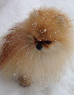 Suspended Snowflakes on LuLu... Pommies love the snow