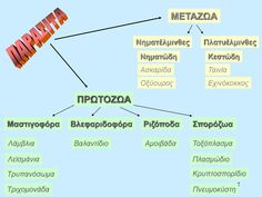 Image result for μεταζωα