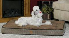 KH Mfg Superior Orthopedic Mocha Dog Bed Medium « Pet Advertisings