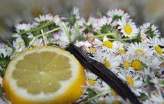 Gänseblümchenblüten, Zitrone, Vanillestange - ein tolles Trio!