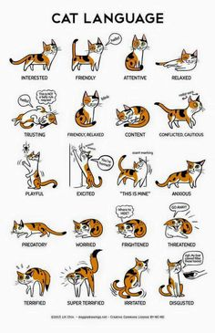 Cat language. The Indian Spot
