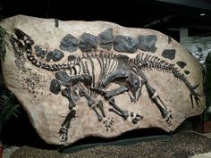 Fossilized in-ground Stegosaurus, Houston Museum of Natural Science   Flickr - Photo Sharing!
