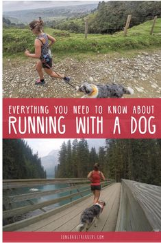 Running is a great way for both you and your pup to burn energy and get healthy. Here are some tips and gear recommendations for running with a dog. Running Guide, Running Plan, Running Workouts, Trail Running, Running Buddies, Hiking Dogs, Dog Runs, Pet Travel, Long Haul