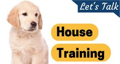 If you've adopted a shelter dog that's not house broken or have a puppy you need to teach, this ...
