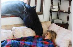 Cute black horse sticking his head through the window to nuzzle on girl in bed. How sweet! Country living at it's best!