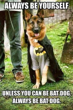 Wicked Training Your German Shepherd Dog Ideas. Mind Blowing Training Your German Shepherd Dog Ideas. Bat Dog, Dog Cat, Funny Dogs, Cute Dogs, Funny Memes, German Shepherd Puppies, German Shepherds, German Shepherd Costume, German Dogs