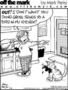 Have Fun This Thanksgiving (16 Funny Pics) Happy Bird Day, Happy Turkey Day, Funny Thanksgiving Pictures, Happy Thanksgiving, Cool Pictures, Funny Pictures, A Comics, Holiday Fun, Funny Cats