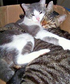 Kitty Love: Part 1#ihavecat #cats #love #snuggles http://ihavecat.com/2014/02/02/kitty-love-part-1/