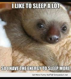 4fe21b94e Funny sloth, funny animal photos, funny animal quotes, funny animal sayings  .For more funny animals and humorous quotes visit