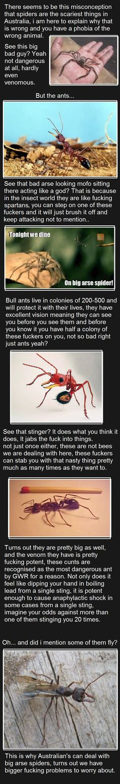 There's also and ant the spews acid onto you and can kill you
