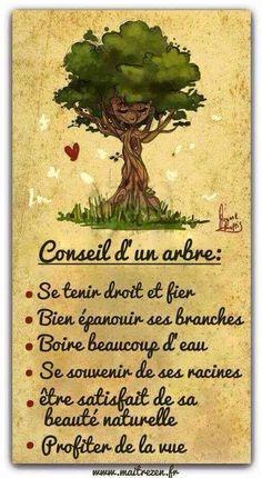 Conseil d'un arbre                                                                                                                                                      Plus