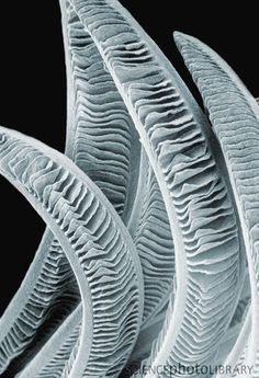 Natural Structures, Natural Forms, Microscopic Images, Electron Microscope, Shape And Form, Patterns In Nature, Fish, Texture, Artwork