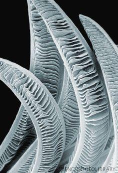 Google Image Result for http://www.sciencephoto.com/image/119562/large/C0055856-Fish_gills._SEM-SPL.jpg