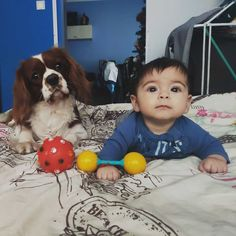 listen very carefully ! Charles Spaniel, Cavalier King Charles, Spaniels, Camilla, Projects To Try, Kit, Stuff To Buy, Noel