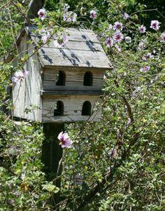 Bird House Kits Make Great Bird Houses Palomar, Birdhouse Designs, Birdhouse Ideas, Bird House Kits, Bird Aviary, My Secret Garden, Yard Art, Rustic Birdhouses, Beautiful Birds