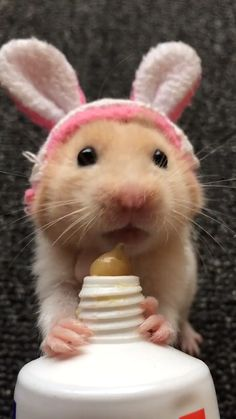 Cute hamsters, funny animal pictures, cute animal videos, too cute, cute little Cute Little Animals, Cute Funny Animals, Funny Cute, Super Funny, Adorable Baby Animals, Cute Baby Cats, Cute Rats, Funny Babies, Funny Dogs
