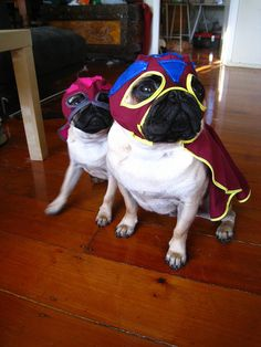 Los Luchadores, I would wrestle the shit out of these doggies
