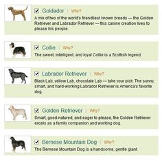 Find Your Ideal Pooch with a Hypoallergenic Dog Breed Selector: You might be searching for the right hypoallergenic dog for you, but you don't know just what breed is right for you.  That is where you can take one of the many hypoallergenic dog breed selectors available to you online!