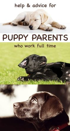 Advice and information for those who want to raise a puppy or dog while working full time