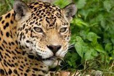 FOTOS ANIMALES SILVESTRES - Buscar con Google