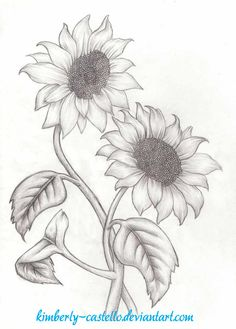 Sunflowers Sketch by kimberly-castello