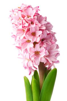 Flower Meanings - List of Flowers With Their Meanings And Pictures - Gardenerdy Sugar Paste Flowers, List Of Flowers, Blossom Garden, Flower Meanings, Blossoms, Mother Nature, Tulips, Orchids, Meant To Be