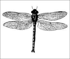 Fly temporary tattoo Set of 2 por Tattify en Etsy