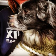 #dogsofinstagram #dogswithsweaters #dogswithunderbites #instadog #catchthemoment366 #instadaily