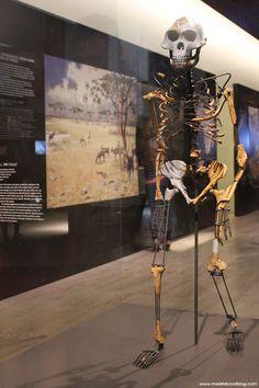 MAN. Museo Arqueológico Nacional (Madrid). Estupendo museo organizado de manera muy didáctica y amena donde conocer un poco más a nuestros antepasados; todos aquellos que pasaron por la Península Ibérica. Está lleno de sorpresas que no os podéis perder.