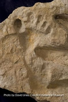 Nephilim Giants and their huge ancient footprints have set in stone. Ancient Aliens, Ancient History, European History, American History, Out Of Place Artifacts, Nephilim Giants, Fresco, Dinosaur Fossils, Mystery Of History