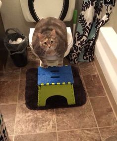 """what-is-this-fruitsnackery: """" My cousin is trying to toilet train her 20 pound…"""
