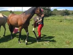 ▶ Thought Field Therapy (TFT) for horses - YouTube
