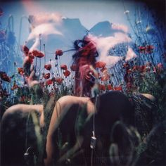 poppies and holga
