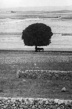 Enzo Sellerio. Plateau Ragusa, 1967
